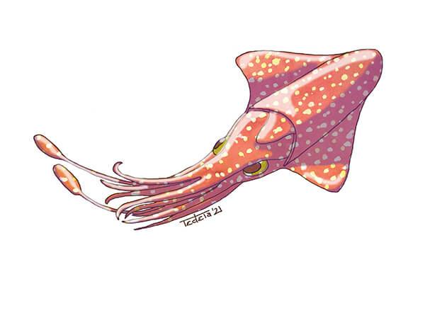 """Ein Kalmar schwingt sich nach links oben aus dem Bild. Er ist Orange gefärbt mit gelben und naturweißen Punkten. Seine Augen sind gelbgrün. Es handelt sich um ein Motiv für die Challenge """"Draw The Oceans"""" von Greenpeace in 2021."""