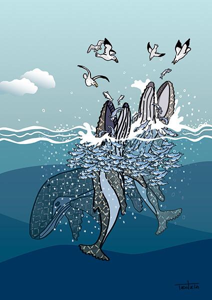 Zu sehen sind eine Gruppe von Walen, die mit Hilfe eines Blasennetzes in der Gruppe einen Heringsschwarm jagen. Sie werden von Möwen umrundet, die ihren Teil der Beute erhaschen wollen
