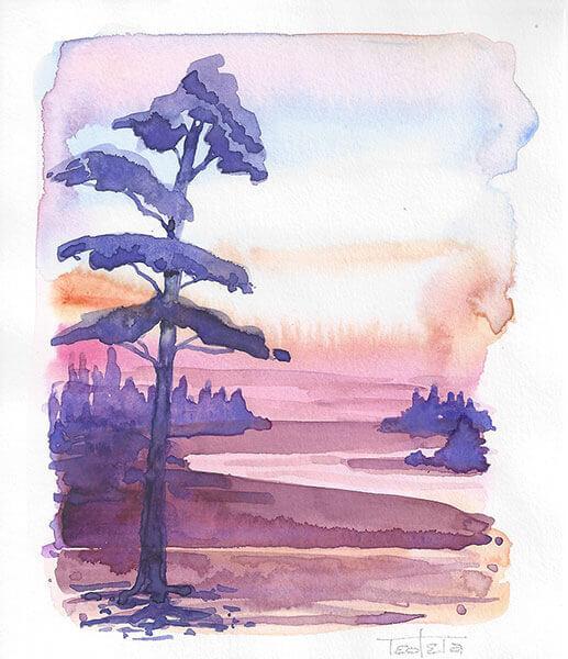 Heidelandschaft kurz nach Sonnenuntergang. Der Himmel glüht in Orange und Violetttönen, die Heide blüht in Violett ein einsamer Nadelbaum strahlt in dunklem Lila im Vordergrund durch das Gegenlicht kleiner Baumgruppen bilden den Mittelgrund.