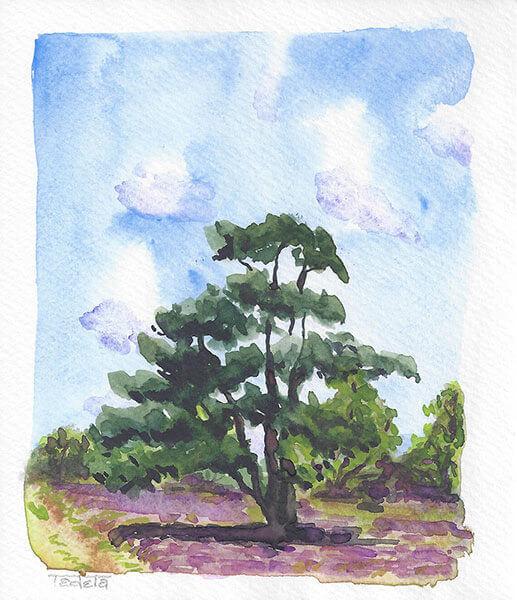 Alleinstehender Nadelbaum auf lila blühendem Heidekraut, ein Weg führt links durch das Bild, Baumgruppe im Hintergrund, leichte Bewölkung