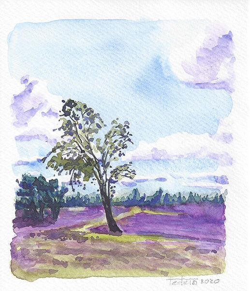 Heidelandschaft, lila blühendes Heidekraut, Alleinstehender Laubbaum an einer Wegkreuzung im Mittelgrund, etwas dahinter eine Gruppe von Nadelbäumen, Bäume am Horizont, bewölkter, sonniger Himmel