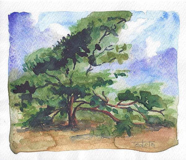 Ausladender Nadelbaum auf sandigem Heideboden, Aufziehende Wolken