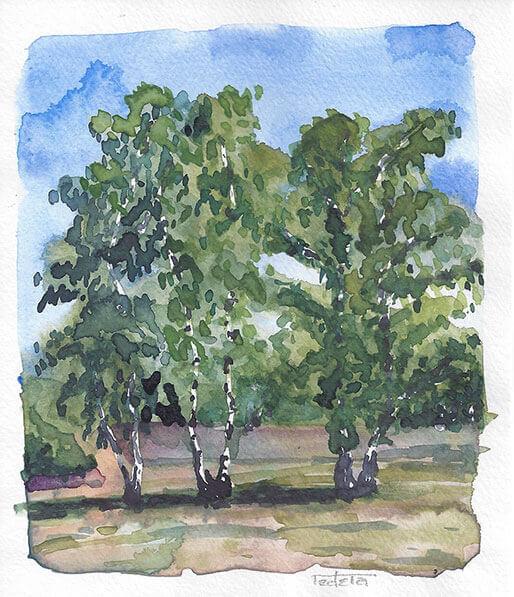 Gruppe von 3 Birken auf Heidelandschaft. Einige lila Flächen deuten blühendes Heidekraut an. Leichte Bewölkung