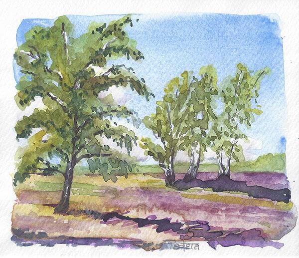 Heidelandschaft, eine Birke links im Vordergrund, Gruppe von 3 Birken im Mittelgrund, Schlagschatten nach rechts, lila Heidekraut, leichte Bewölkung